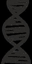 deoksyrybonukleinowe-acid-371983_1280.pn