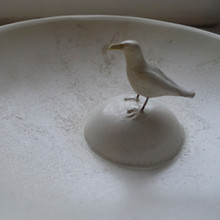 Gull plate1