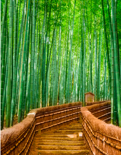 green bamboo 2 2.png