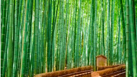 TallGreen Bamboo