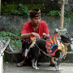 Aku dan Anjing Baliku (Me and my Balidog)