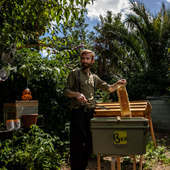Bees and Refugees