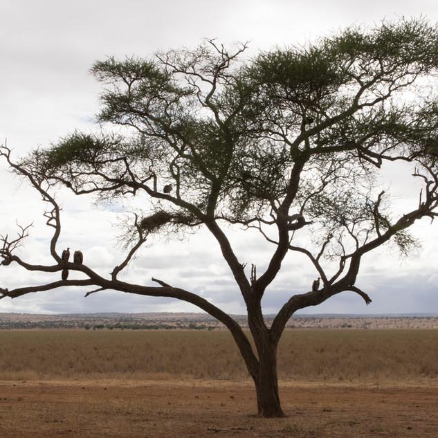 Landscape with vultures