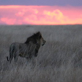The lion and his land
