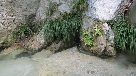 Plants at side of Archeron river