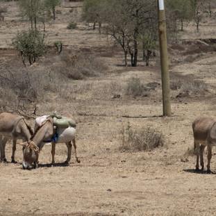 Donkeys at side of road