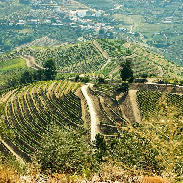 Vineyards, Duoro River, Portugal