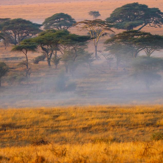 Serengeti misty sunrise