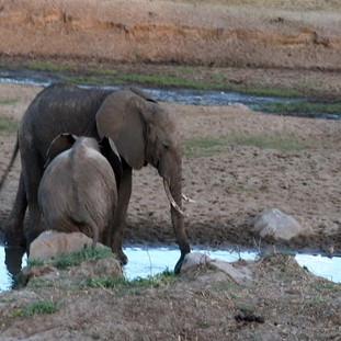 Baby elephant and water.avi