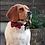 Thumbnail: Noeud-papillon pour chien moyen