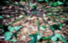 closeupofcenter.jpg