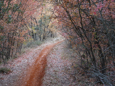 Ruta Altomira