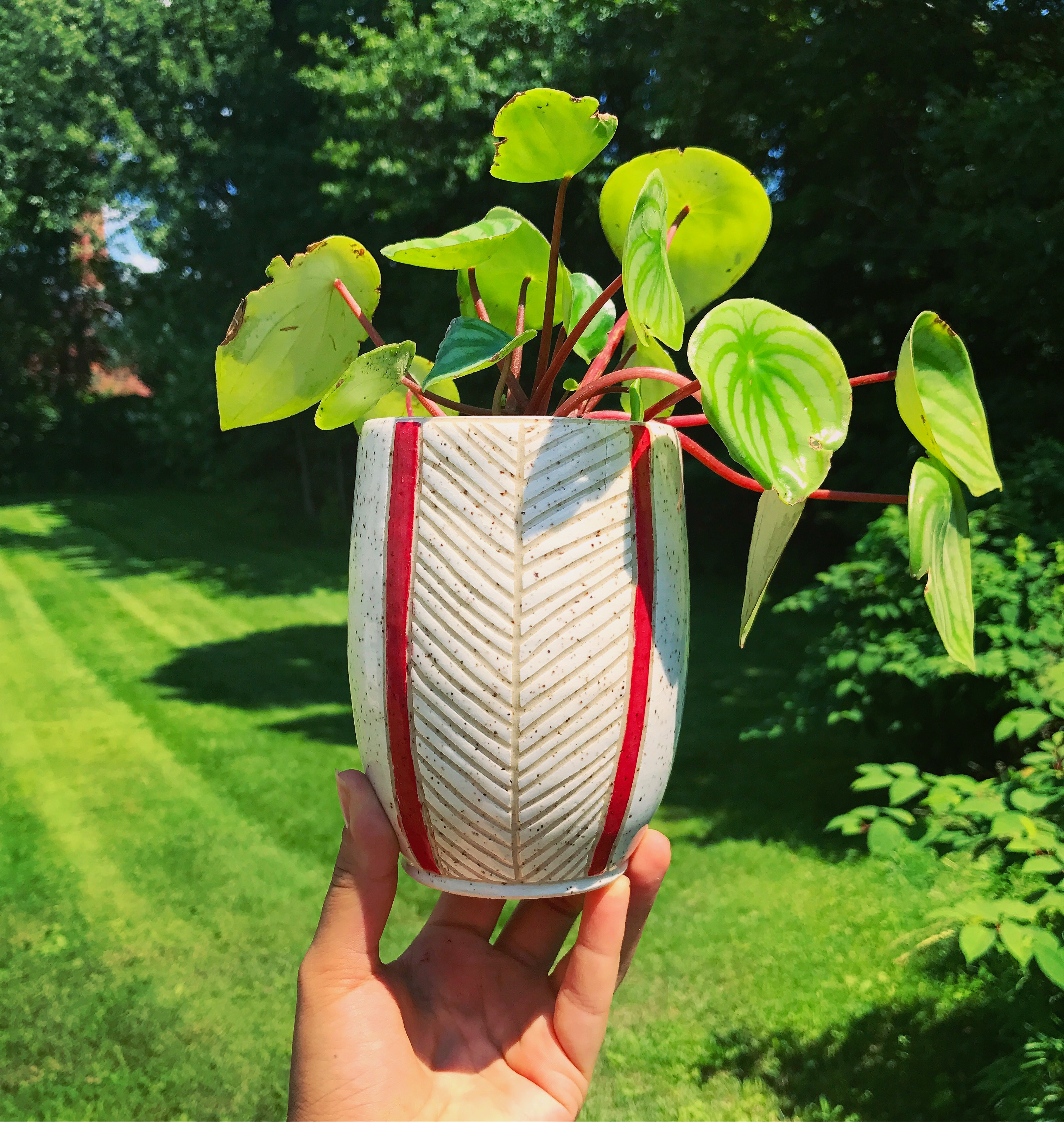 Red Stripped Planted