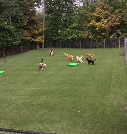 Pet Pals huge private dog park!