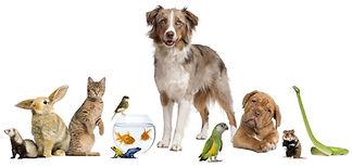pet care, cat care, bunny care, fish care, bird care, vacation pet sitting, vacation pet care