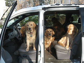 dog van, transportation, dog walking