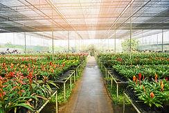 bromeliad-flower-orchid-nursery-farm-183