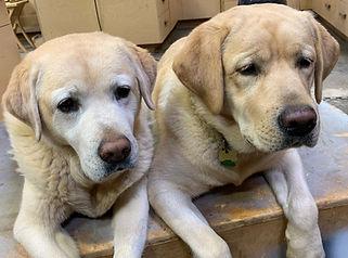 Wix dogs - 1.jpeg