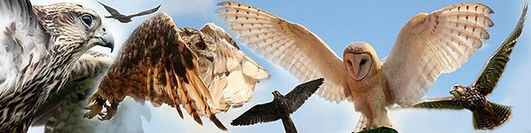 wild wings banner.jpg