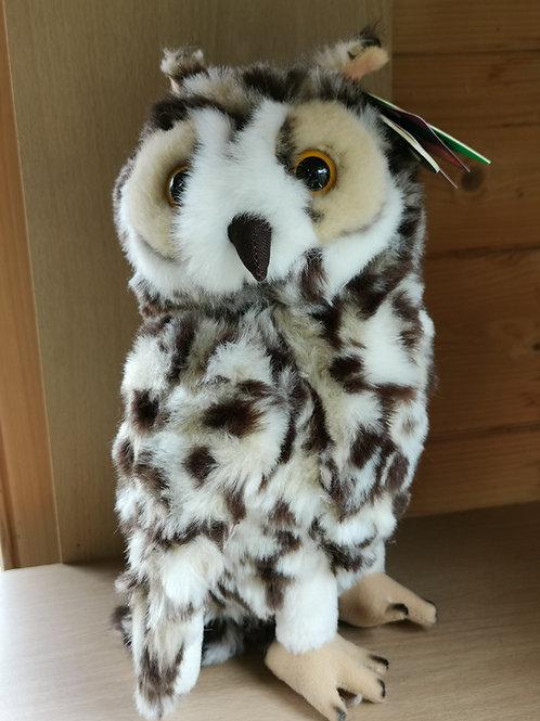 Short Eared Owl large
