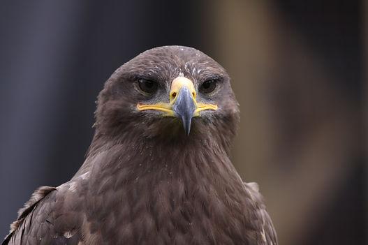 Birds of prey001.JPG