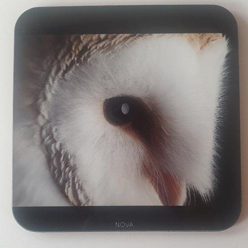"""Nova"" Barn Owl Coaster"