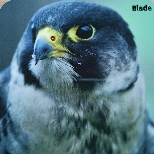Blade Peregrine Falcon Coaster
