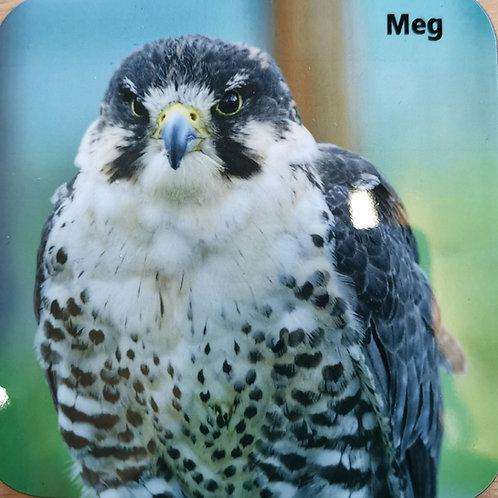 Meg Pere X Saker Falcon coaster