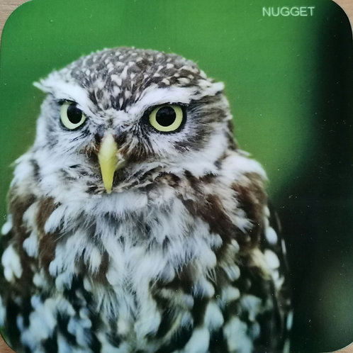 """Nugget"" Little Owl Coaster"