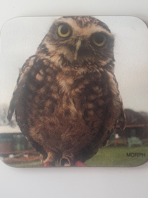 """Morph"" Burrowing Owl Coaster"