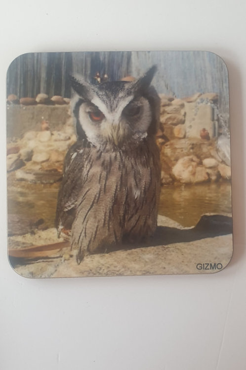 """Gizmo"" White Faced Scops Owl Coaster"