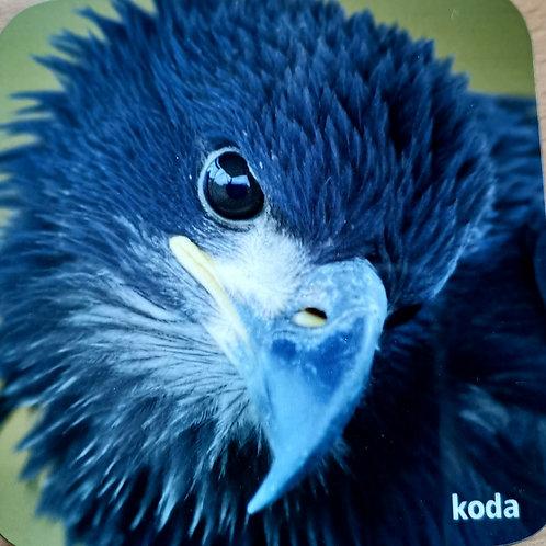 Koda Juvenile Bald Eagle Coaster