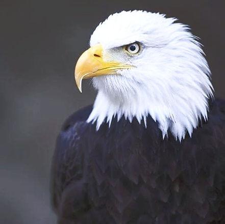 eagle%20real_edited.jpg