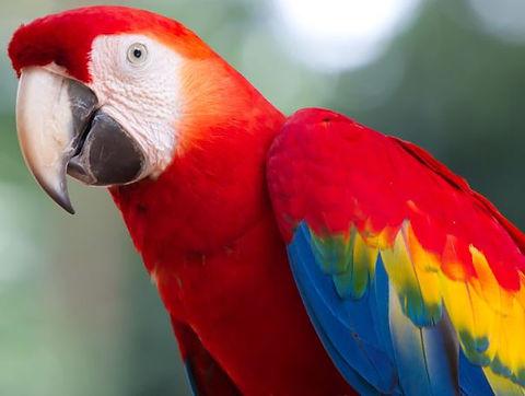 parrot real.JPG
