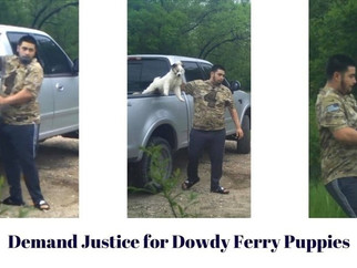 DSDA asks you to sign petition demanding justice for Dowdy Ferry Puppies beaten to death