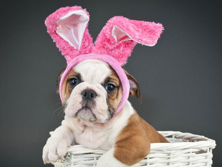 Easter Foods that are Dangerous for Dogs