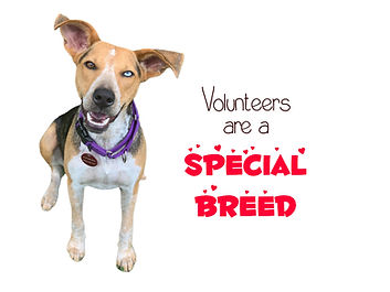 VOLUNTEERS SPECIAL BREED.jpg