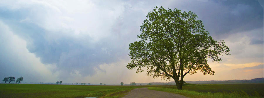 tree-after-the-storm 2.jpg
