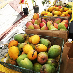Glenn, Valencia Pride, Nam Doc Mai and Island Mangoes, Tanja's passion fruit and a few sweet tamarin