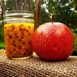 Tanja's giant red passion fruit are back! We'll have a limited number for sale this weekend, St