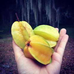 Assorted Starfruit #starfruit #carambola #fruit #fresh #florida #freshfood #fruitarian #sweet #grow