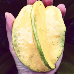 Carambola, this one is ripe, the fruit starts out white, and turns a light yellow when it's ready to