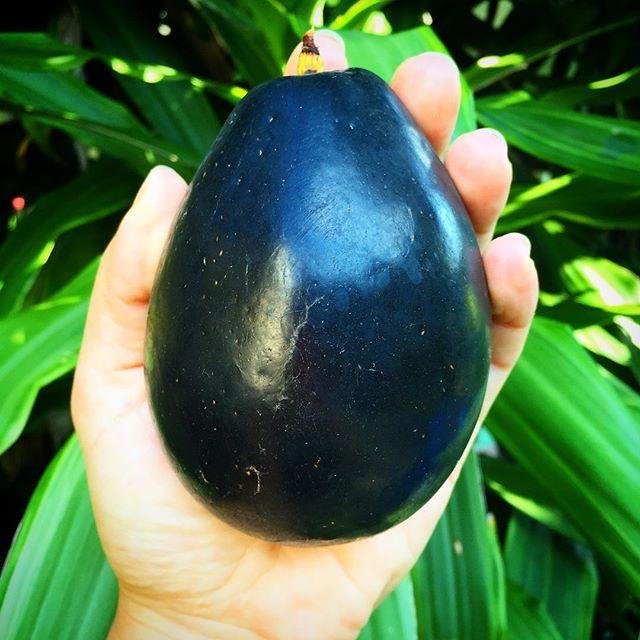Brogden Avocado, skin so thin there's no need to peel! #avocado #brogdenavocado #thinskin #tropicalf