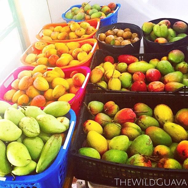 Mangoes! Big harvest this week, all fiberless varieties! As always our fruit is #grownbyus #grownnat