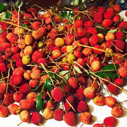 Lychees we picked yesterday! They'll be for sale Saturday at the Ybor Market, Centennial park in Ybo