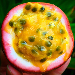 Tanja's red passion fruit! #passionfruit #maracuja #maracujá