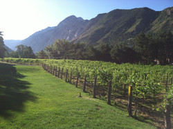 La Caille Vineyard 1