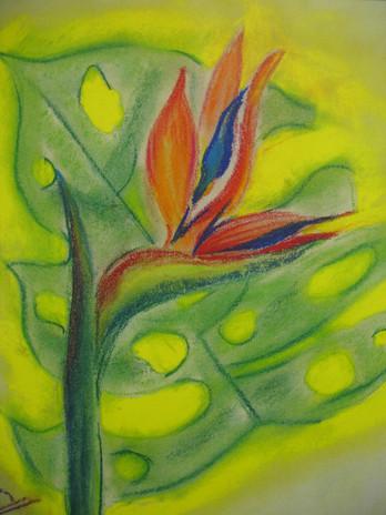 soft pastel on Ingres paper