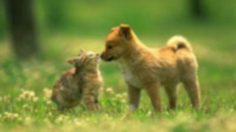 10-piante-velenose-per-cani-e-gatti.jpg