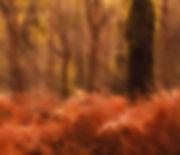 Orange Wood.jpg